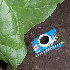Billede at toppen af en brugt mælkekarton der stikker op af jorden og som snegle kan kravle ned i.