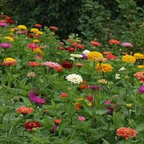 Billede af en masse blomster i forskellige farver