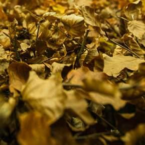 Visne gule blade hvor insekterne kan gemme sig