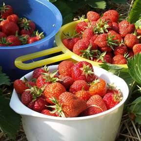Tre skåle med friskplukkede jordbær