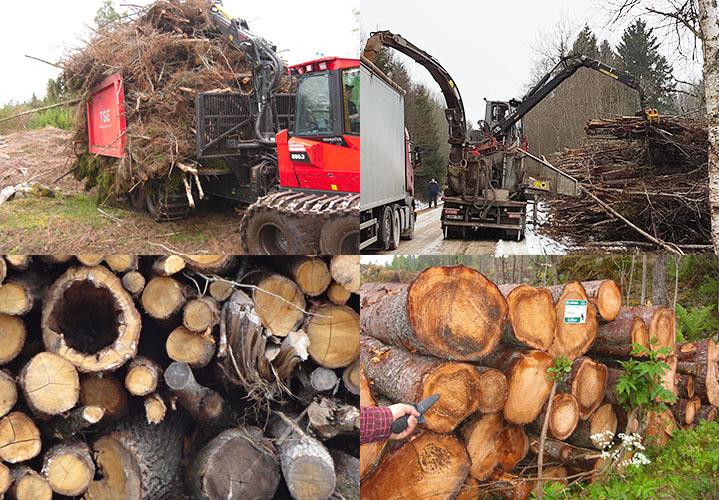 Billede af resttræ fra skrovbrug som bruges til energi